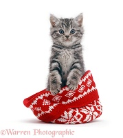 Silver tabby kitten in a woolly hat