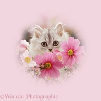 Persian kitten among flowers