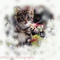 Tabby kitten among spring flowers