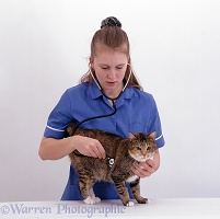Vet nurse listening to cat's chest