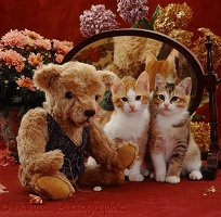 Kittens with teddy and mirror