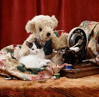 Kitten with teddy and sewing machine