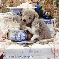 Kittens and teddy in wash-stand set