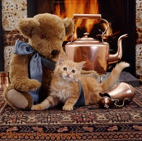 Kitten and teddy in front of the fire