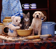 Yellow Labrador pup and kitten with cream teddy