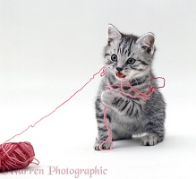 Kitten with pink wool