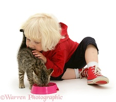 Little girl feeding a tabby kitten