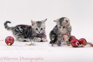 Silver tabby kittens playing with baubles and tinsel