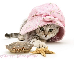 Kitten in hat