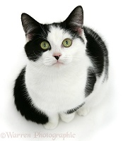 Black-and-white cat looking up