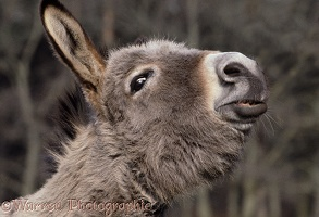 Donkey making a funny face