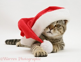 Tabby cat under a Father Christmas hat