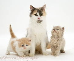 Mother cat and two kittens
