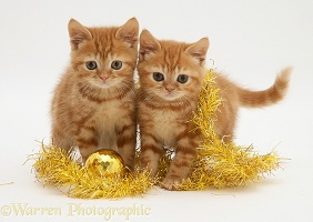 Red tabby kittens with tinsel and bauble