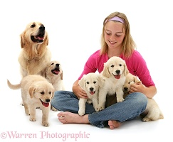 Girl with Golden Retriever and puppies