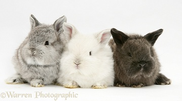 Three cute baby rabbits