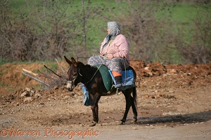 Woman on a donkey