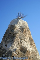 Fairy chimney with Sweet Almond tree growing on top