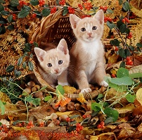 Kittens in an autumn basket