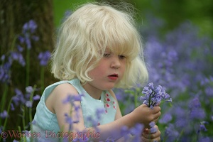 Little girl in Bluebell wood