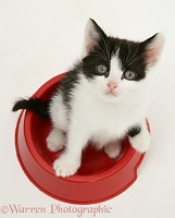 Black-and-white kitten in a food bowl
