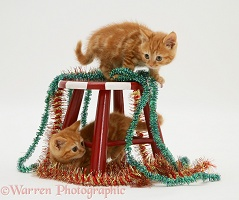 Red tabby kittens with tinsel and child's stool