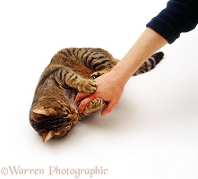 Cat holding and scratching a person