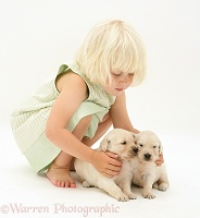 Little girl with Golden Retriever pups