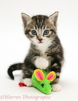 Tabby-and-white kitten with a toy mouse