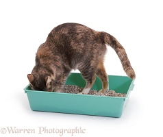 Cat using a litter tray