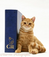 Ginger cat with 'Your Cat' binder