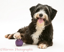 Shaggy dog with foot on ball