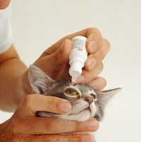 Kitten receiving eye drops
