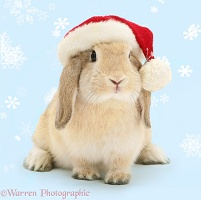 Sandy Lop rabbit wearing a Santa hat