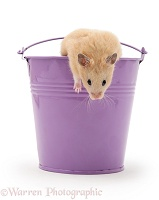 Hamster in a metal bucket