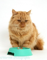Ginger cat not eating from a bowl