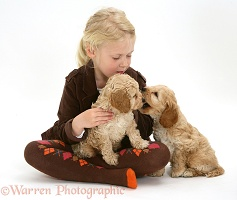 Girl with Cockapoo puppies
