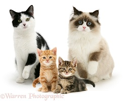 Group of assorted cats and kittens