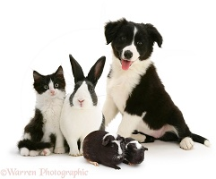 Black-and-white pet animal group