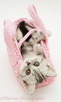 Silver tabby kitten in a child's pink cloth bag