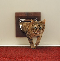 Tabby cat coming through the cat flap