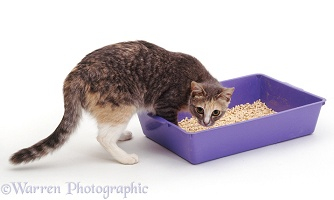 Cat about to use her litter tray