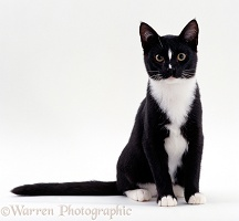 Black-and-white cat sitting
