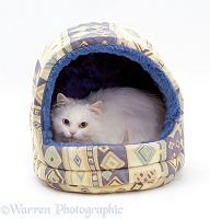Longhaired white cat in an igloo bed