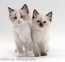 Two cute kittens standing together