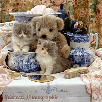 Persian kittens with teddy and Victorian wash set