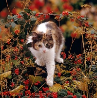 Calico cat among seedheads and berries