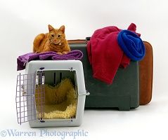 Ginger cat with pet transporter