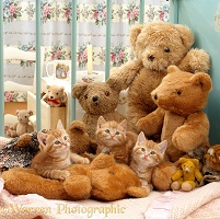 Three ginger kittens in cot with teddy bears