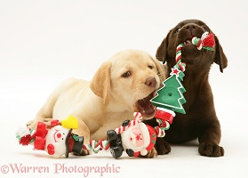 Retriever pups chewing Xmas decorations
